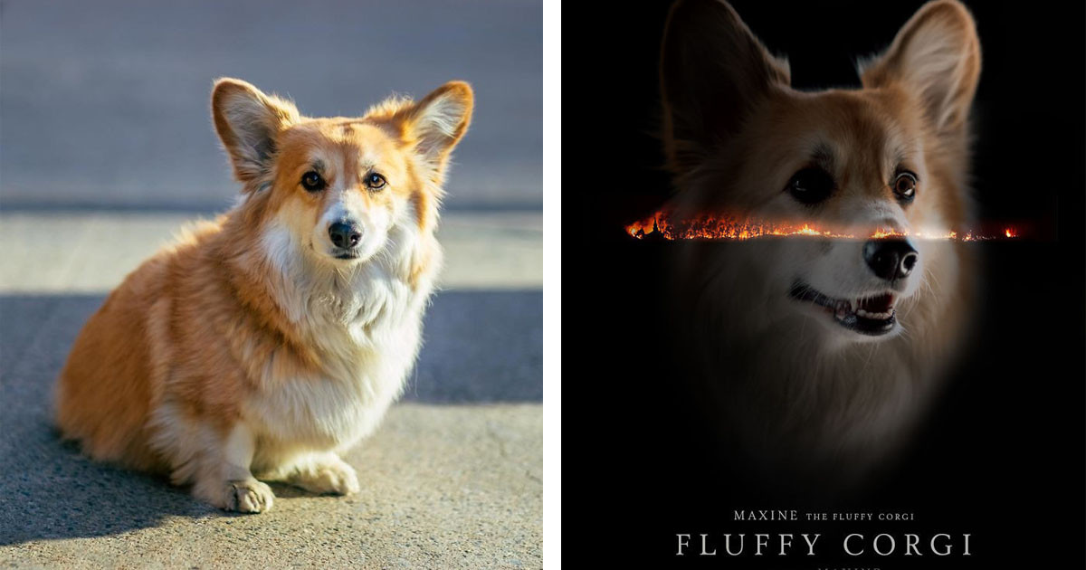 Maxine the Corgi Doggo Being Photoshopped Into Movie Posters Is Everything Right Now