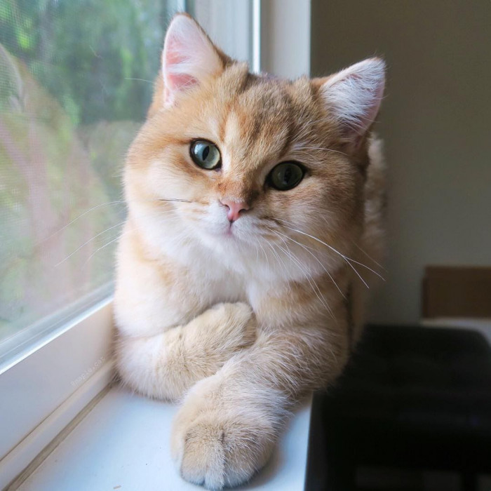 12. This cat is gorgeous