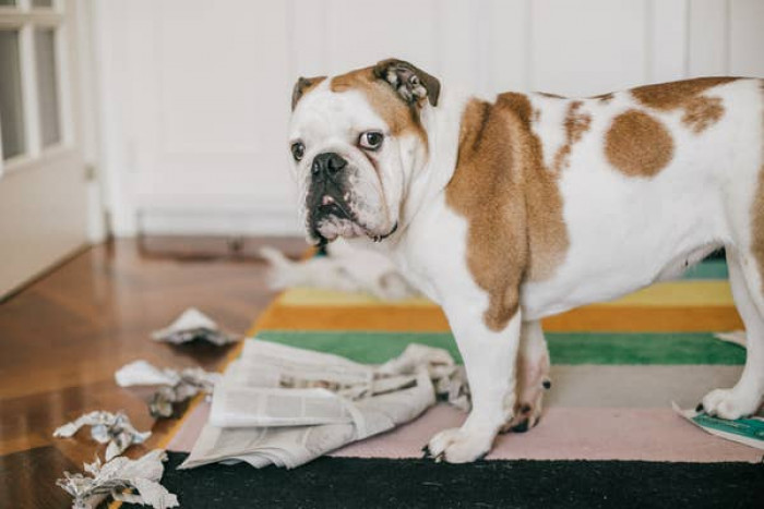 6. It is important to dog-proof your home.