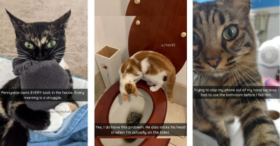 Mischievous Cats Who Are Not Behaving Very Nicely