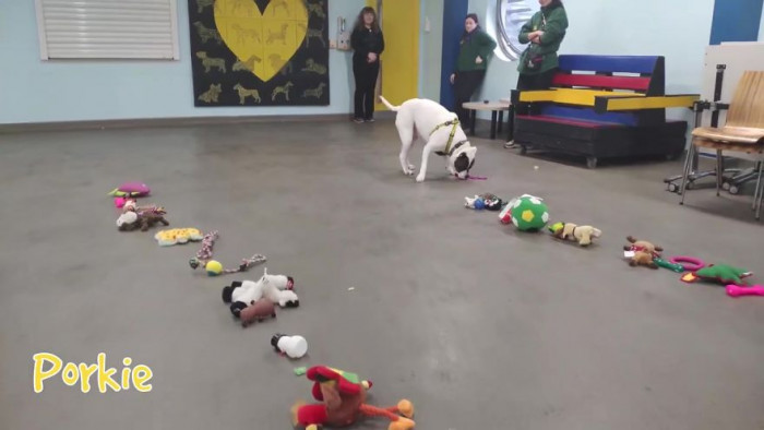 With Christmas fast approaching, the rehoming staff at Dogs Trust wanted to make sure their homeless pups were not forgotten.