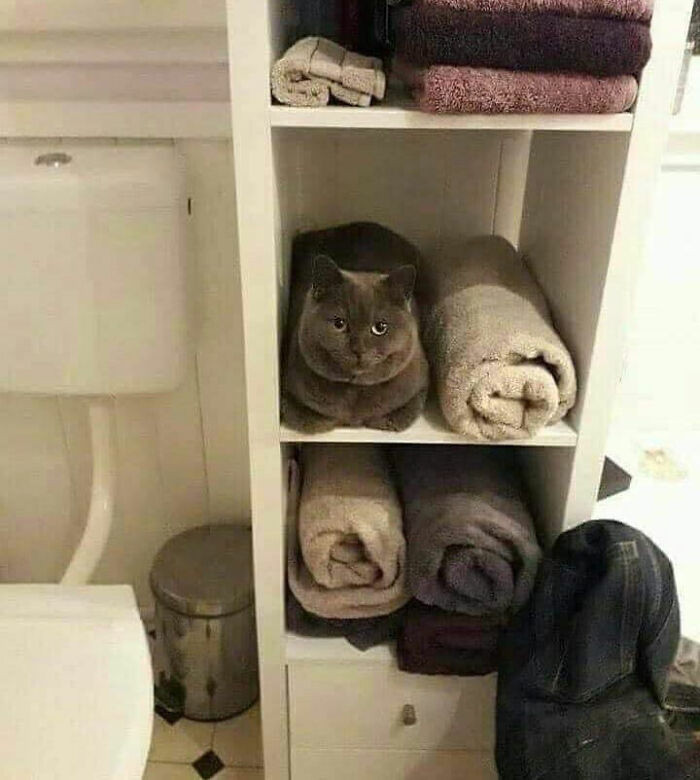 6. Does one of these towels have eyes?