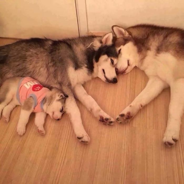 11. A happy fur family