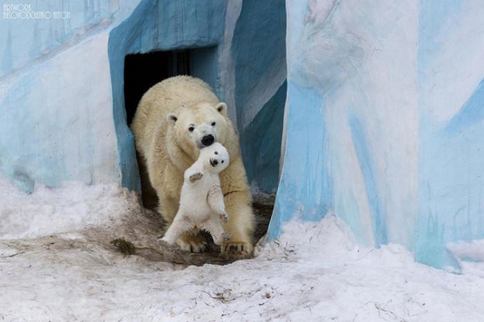27. Mama and baby polar bear