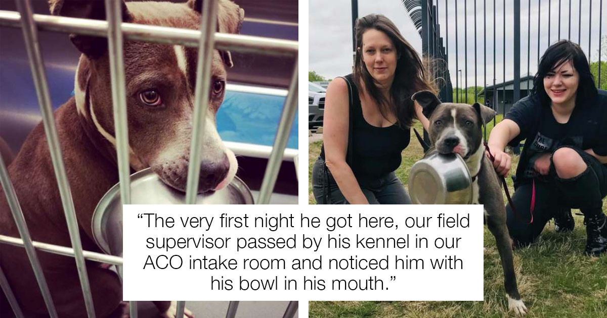 This Rescue Dog Has An Adorable Obsession With His Food Bowl