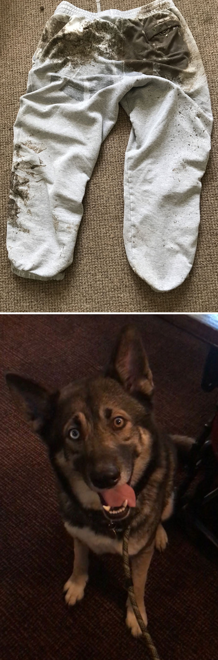 His dog saw a squirrel and dragged him through the mud on his butt