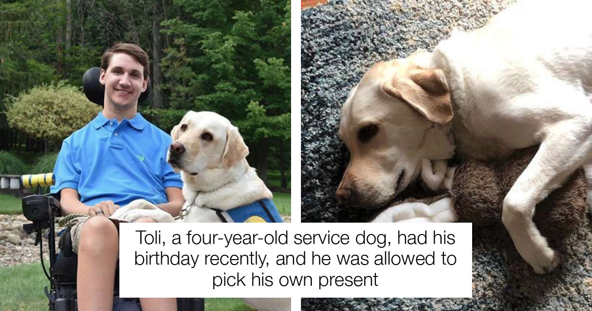 Special Service Dog Picks His Own Present On His Birthday
