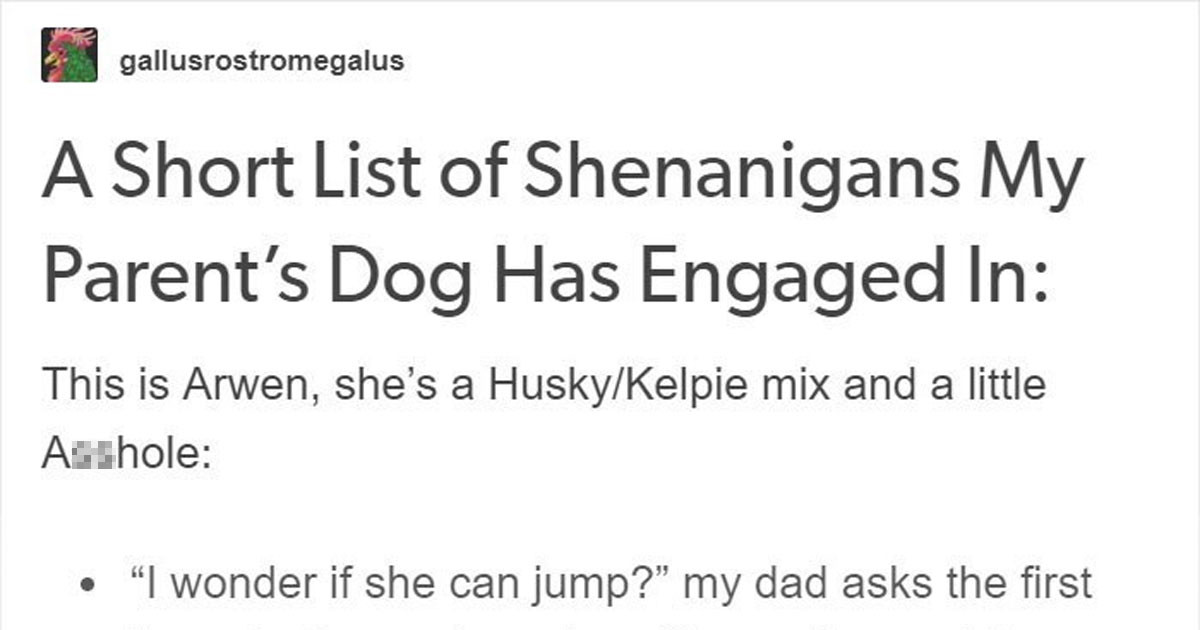 Tumblr User Shares The Unbelievable Antics Of Her Family's Autism Support Dog