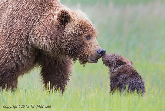 8. Bear kissing it's baby