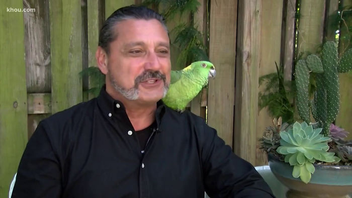 Rambo's owner has since taken him around the neighborhood to introduce him personally and explain his antics to avoid any future confusion.