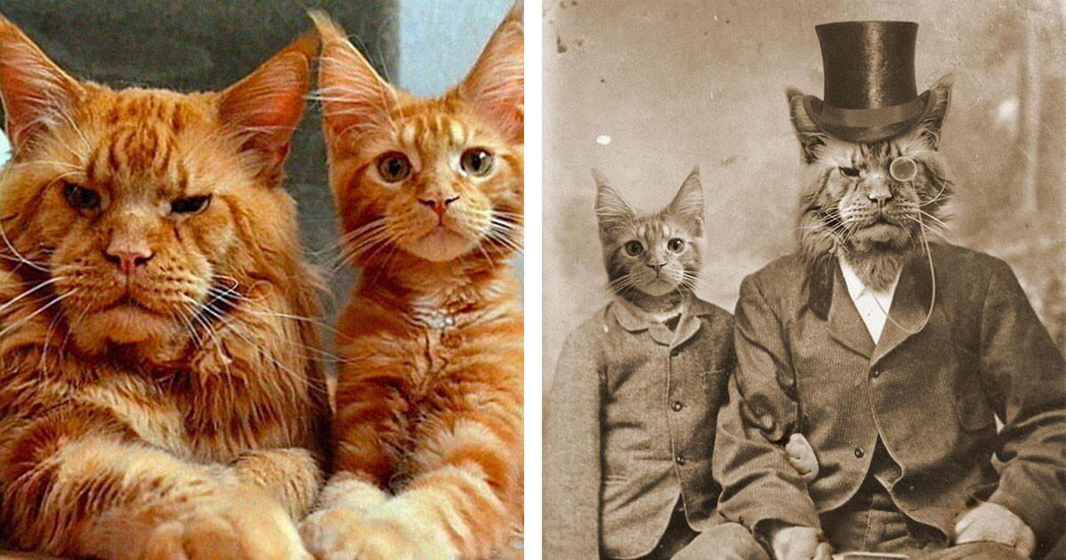 40 Brilliant Winners Of Photoshop Battles