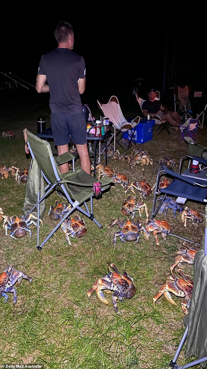Crabs eagerly await food.