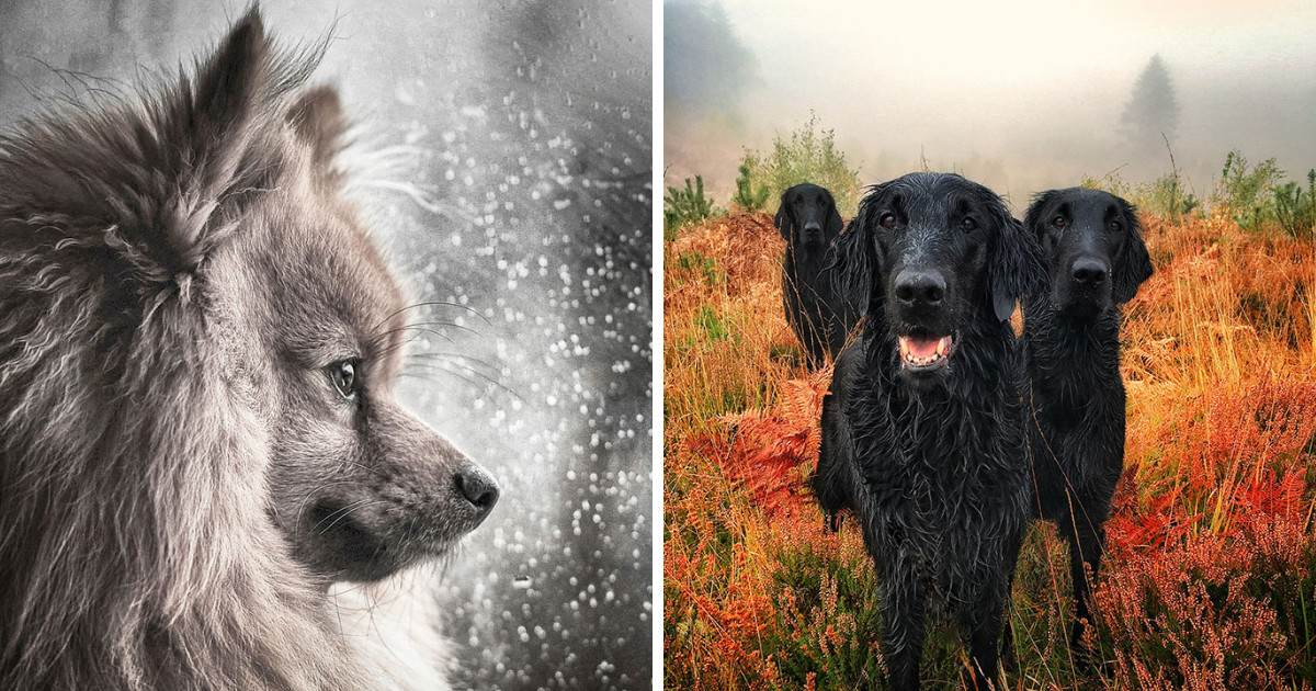 National Geographic Just Announced The Best Dog Photos Of The Year And It's Going To Make You Swoon With Love